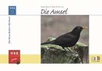 NBB junior Amsel